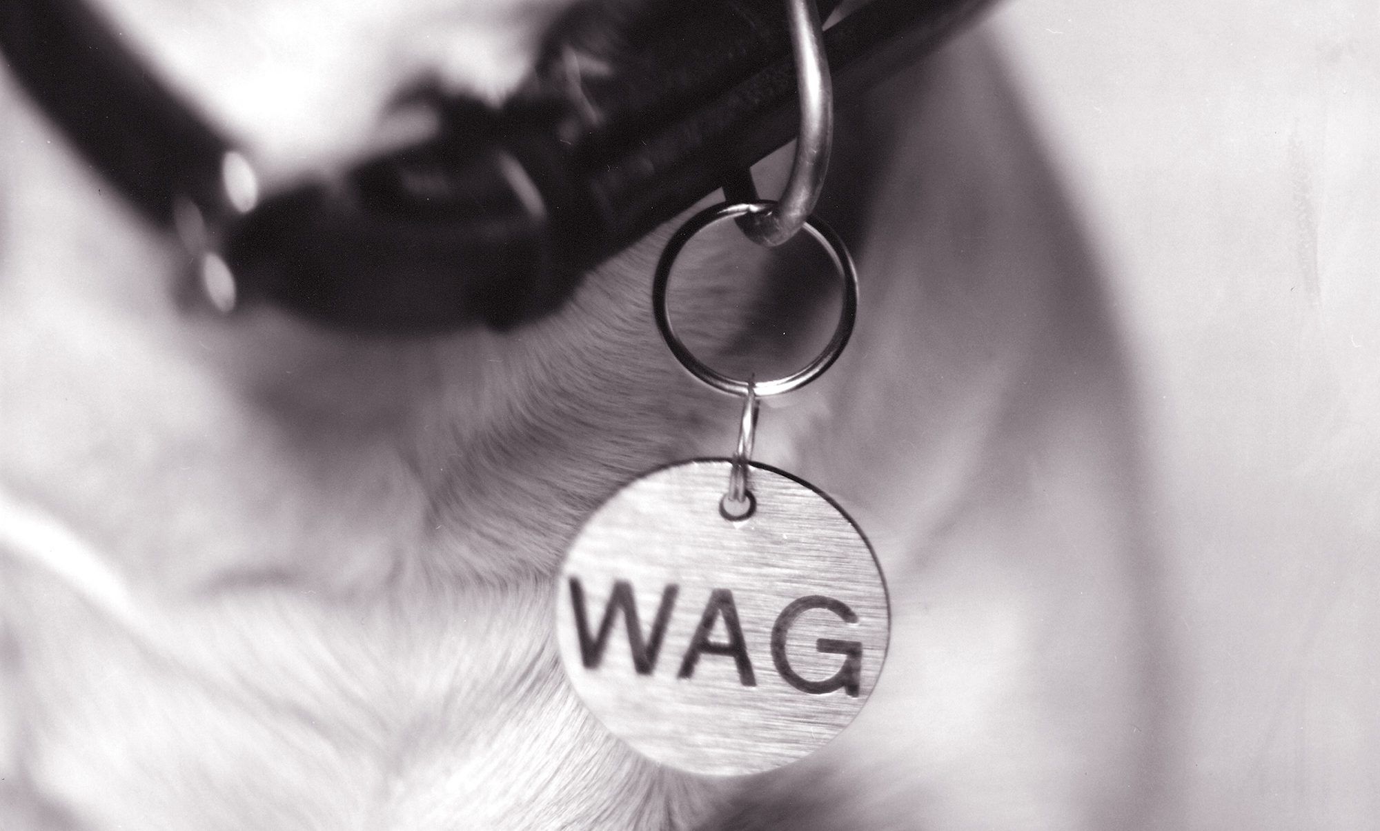 dog_home_page
